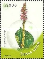 [Flowers - African Orchids, Typ FUL]