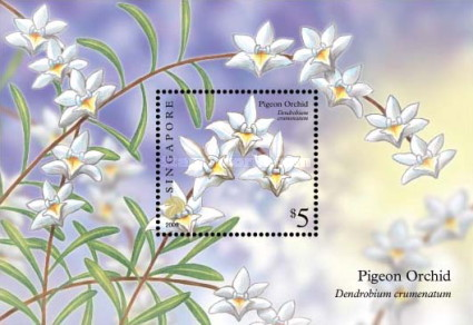 [Flowers - Pigeon Orchid, Typ ]
