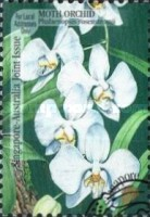 [Orchids, Typ AEL]