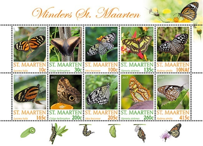 [Butterflies of St. Maarten, Typ ]