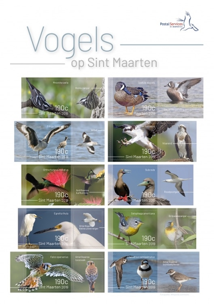 [Birds of Sint Maarten, Typ ]