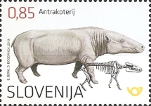 [Fossil Mammals in Slovenia - Anthracothere, type ARC]