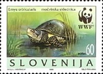 [WWF - European Pond Tortoise, type DP]