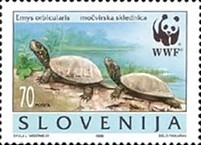 [WWF - European Pond Tortoise, type DQ]