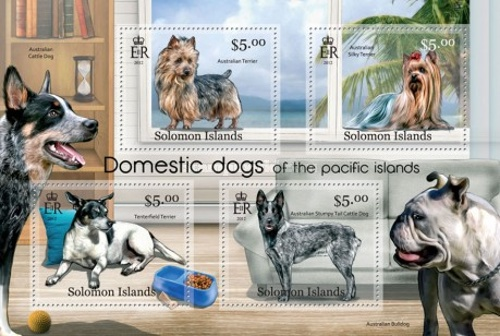 [Domestic Dogs of the Pacific Islands, type ]