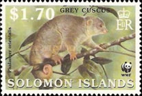 [Endangered Species - Grey Cuscus, Typ AHR]