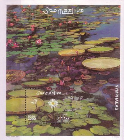 [Water Lilies, type ]