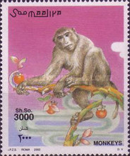 [Monkeys, type AJI]