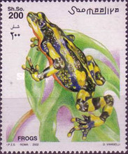 [Frogs and Toads, type AJT]