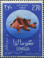 [Child Welfare - Tropical Fish - Inscribed