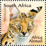 [Small African Cats, Typ BUF]
