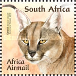 [Small African Cats, Typ BUG]
