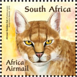 [Small African Cats, Typ BUI]