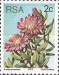 [Flora - Protea Plants, Typ PH]