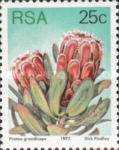 [Flora - Protea Plants, Typ PS1]