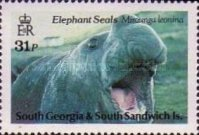 [Southern Elephant Seal, type BB]