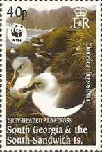 [Worldwide Nature Protection - Gray-headed Albatross, type HG]