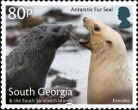 [Marine Life - Fur Seals, type TM]