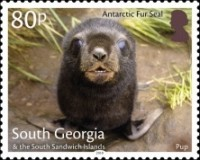[Marine Life - Fur Seals, Typ TN]