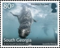 [Marine Life - Fur Seals, type TO]