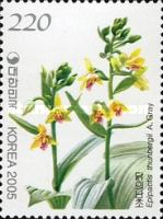 [Orchids, type CGG]