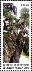 [Old & Historic Trees of Korea, type CQP]