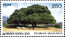[Old & Historic Trees of Korea, type CQQ]