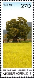 [Old & Historic Trees of Korea, type CVA]