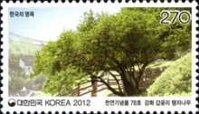 [Old & Historic Trees of Korea, type CVB]