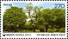 [Old & Historic Trees of Korea, type CVC]