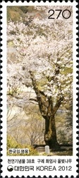 [Old & Historic Trees of Korea, type CVD]