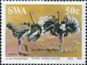 [South African Ostrich, type KX]