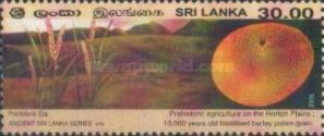 [Ancient Sri lanka, Typ ANK]