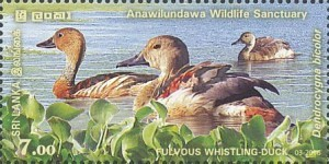 [World Wetland Day, Typ BIB]