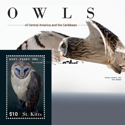 [Birds - Owls of Central America and the Caribbean, type ]