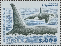 [Whales, Typ QY]