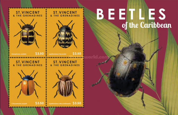 [Beetles of the Caribbean, Typ ]