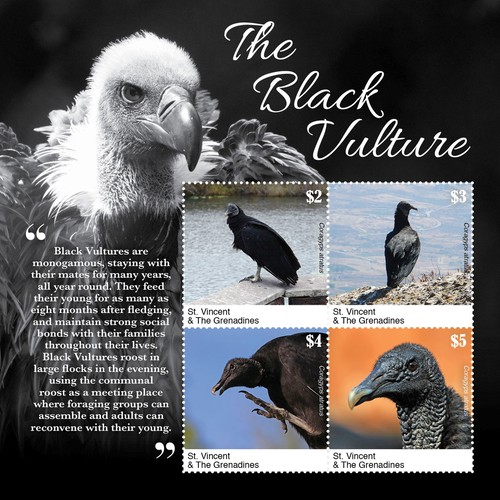 [Birds - The Black Vulture - Coragyps atratus, type ]