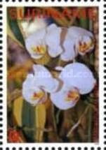 [Flora - Orchids, Typ CCN]