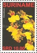 [Flora - Orchids, Typ CGA]