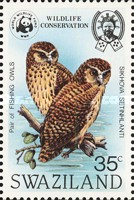 [Wildlife Conservation - African Fishing Owl, type KL]