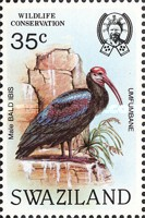 [Birds - Wildlife Conservation - Bald Ibis, type MH]