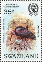 [Birds - Wildlife Conservation - Bald Ibis, type MK]