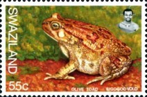 [Frogs, type UE]