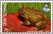[Frogs, type UF]