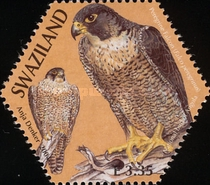 [Birds - SAPOA Joint Issue, type WK]