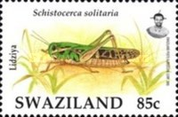 [Insects - Locusts, type WU]