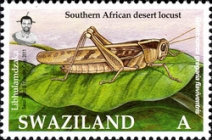 [Locust and Grasshoppers, type ZA]
