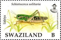 [Locust and Grasshoppers, type ZB]