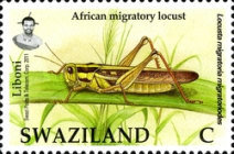 [Locust and Grasshoppers, type ZC]